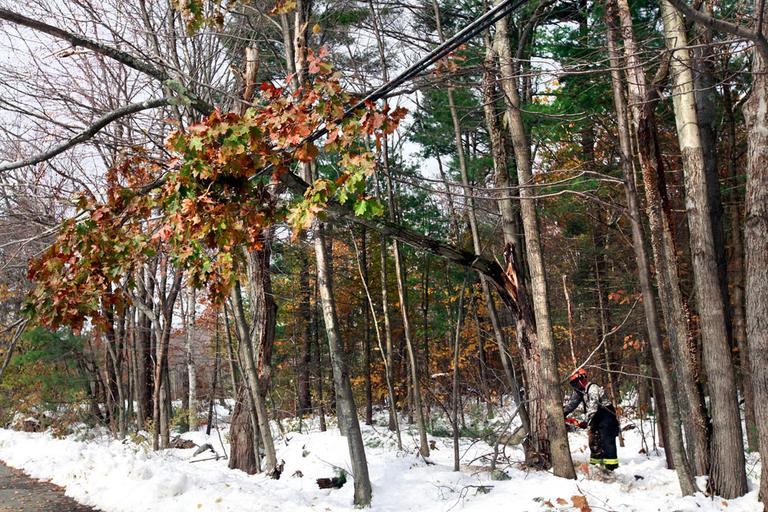 National Guardsman Kenny Gehl cuts a tree to remove it from a power line in Barre Monday. (AP)
