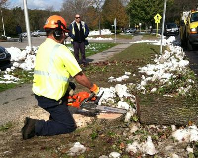 A Lexington Public Works employee trims a tree that fell during the snowstorm. (Nick Fountain for WBUR)