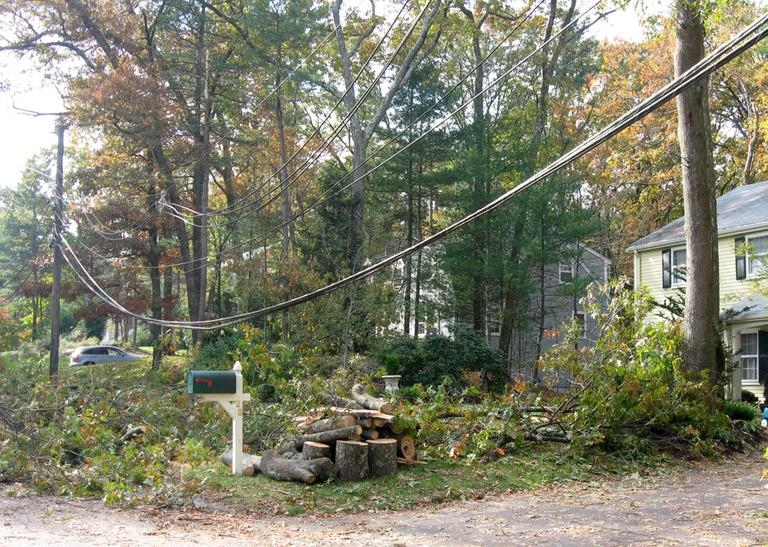 A sagging power line in Concord in need of repair (Sacha Pfeiffer/WBUR)