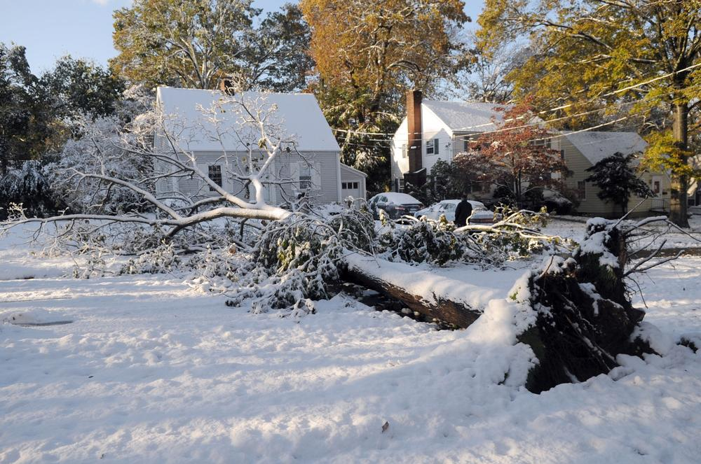 A large tree lies across a street in North Haven, Conn., Sunday, Oct. 30, 2011 as the result of the freak snow storm last month. About 20,000 people in Conn. were still in the dark on Tuesday. (AP)