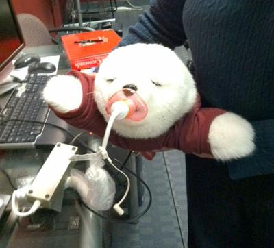 Paro, a robotic pet seal from MIT's AgeLab used to comfort Alzheimer's patients (Deb Becker/WBUR)