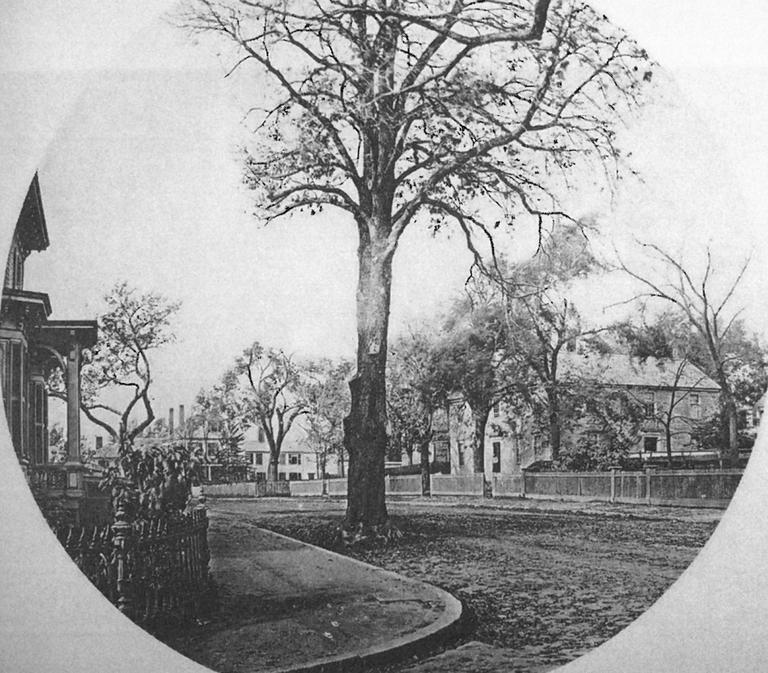 View of Brattle Street and the 'spreading chestnut tree' of Longfellow's poem 'The Village Blacksmith' in 1873. (From W.J.Stillman, Poetic Localities of Cambridge (Boston: James R Osgood, 1876)