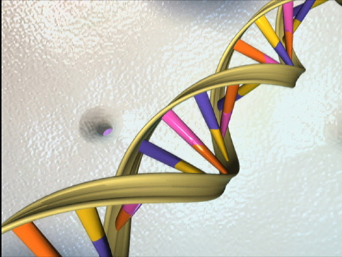DNA double helix (National Human Genome Research Institute)