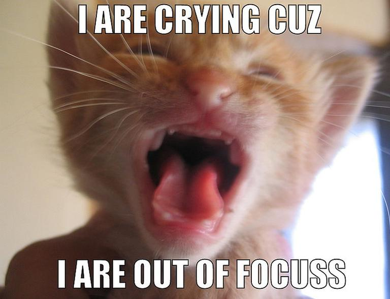 "Memes like this ""LOLCat"" are ubiquitous on the internet. (Wikipedia)"