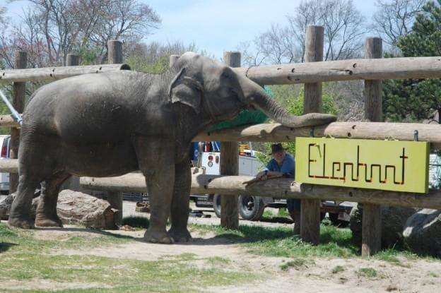 Ruth visits head zoo keeper Bill Sampson. (Susan Hagner for WBUR)