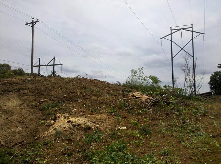 NSTAR's transmission lines in Wayland (Lynn Jolicoeur for WBUR)