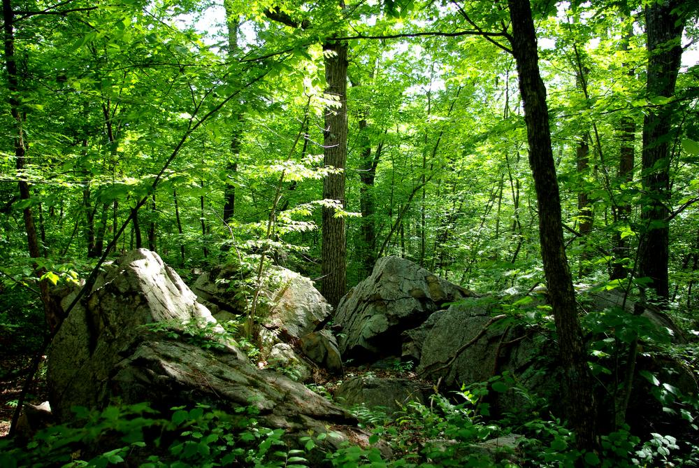 The Middlesex Fells. (Photo Courtesy of Flickr/Paul-W)