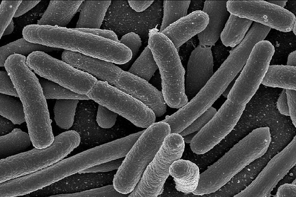 Obeserving bacteris and blood essay
