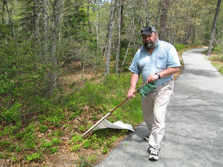 Larry Dapsis, the county entomologist for Cape Cod, drags a white flag through leaf litter at Nickerson State Park. The ticks he picks up will be tested to see how many carry Lyme. (Beenish Ahmed for WBUR)