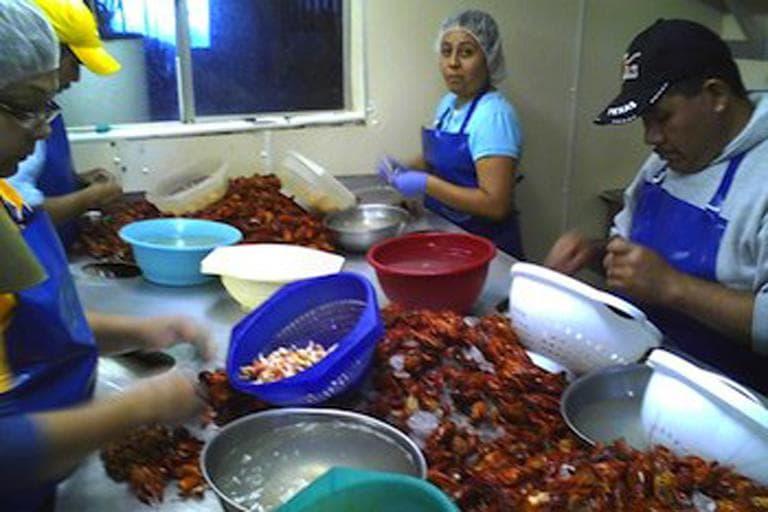 Guestworkers peeling crawfish at Walmart supplier C.J.'s Seafood, Breaux Bridge, Louisiana. (National Guestworker Alliance)