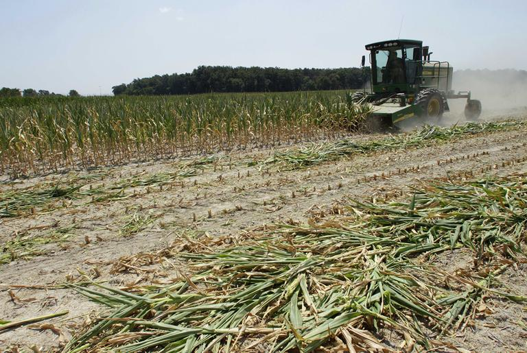 <strong>Steve </strong>Niedbalski is seen chopping down his drought and heat stricken corn for feed Wednesday, July 11, 2012 in Nashville, Ill. Farmers in parts of the Midwest, dealing with the worst drought in nearly 25 years, have given up hope for a corn crop and are mowing over their fields and baling the heat withered plants for livestock feed. (AP)