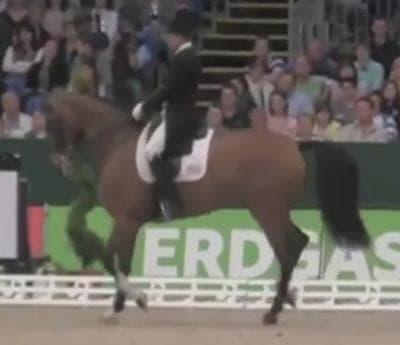 Ann Romney's dressage horse Rafalca.
