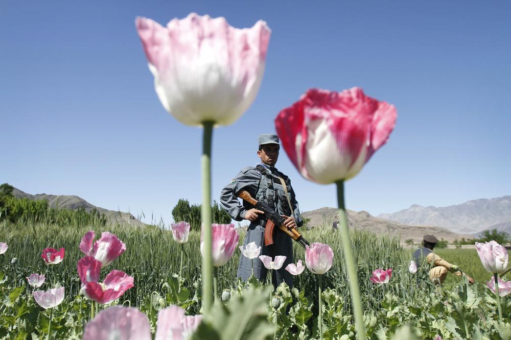 Kerry Healey: It's time Americans realized what our appetite for illegal drugs does to the individuals who are compelled—economically or at gun point—to produce, process and transport the drugs we use. Above, an Afghan policeman guards an opium poppy field east of Kabul, Afghanistan. (AP Photo)