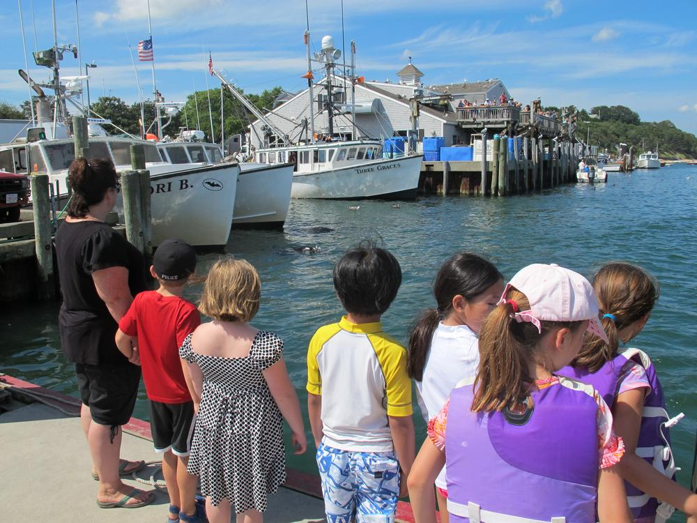 Children watch gray seals swim among the docked boats at Chatham's fish pier. (Curt Nickisch/WBUR)
