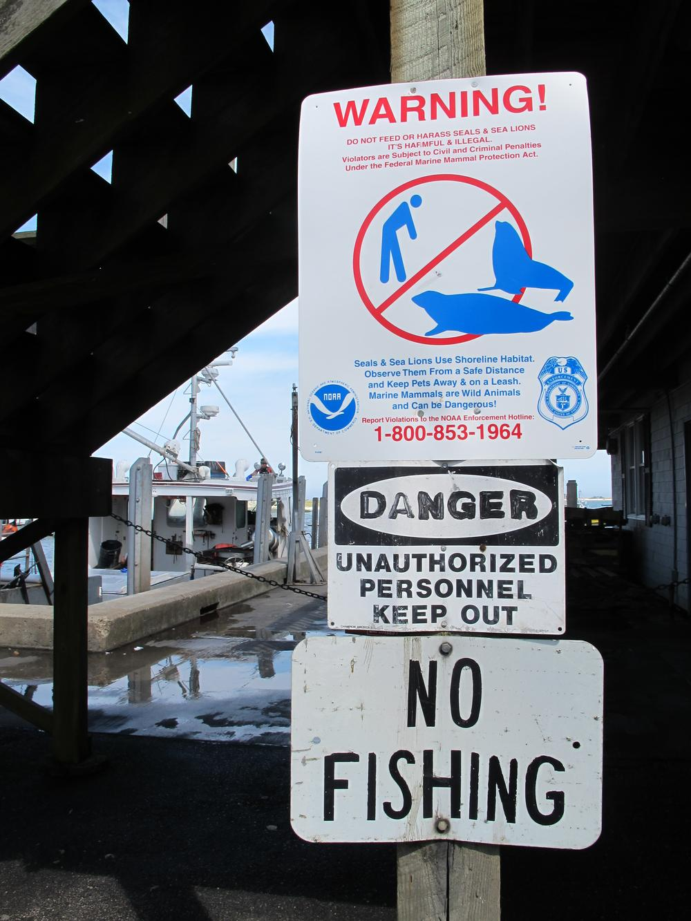 Signs at Chatham's fish pier warn tourists it's illegal to harass seals. (Curt Nickisch/WBUR)