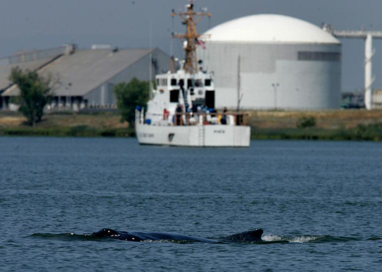 In this 2007 file photo, the Coast Guard Cutter Pike is seen in the background as a humpback whale surfaces in the Port of Sacramento. (Rich Pedroncelli/AP)