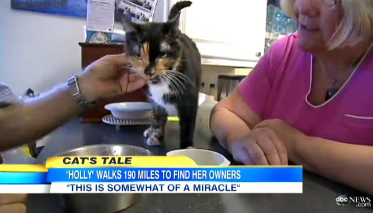 Holly, a 4-year-old tortoiseshell cat, was separated from her owners during an RV trip in Daytona Beach, Fla. She turned up two months later, about a mile from the Richters' house in West Palm Beach, about 200 miles away from Daytona. (ABC News screenshot)