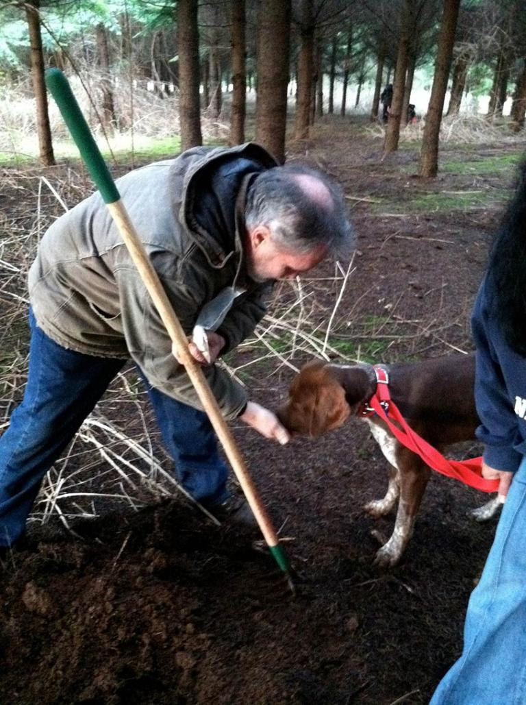 """Smell the truffle, then hunt the truffle."" A truffle-hunting dog in Oregon.(Kathy Gunst)"
