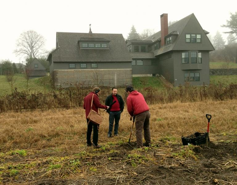 Digging for parsnips at Allandale Farm. (Dina Rosendorf/WBUR)