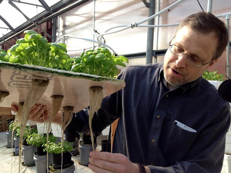 Jeff Barton at Water Fresh Farms (Meghna Chakrabarti/WBUR)