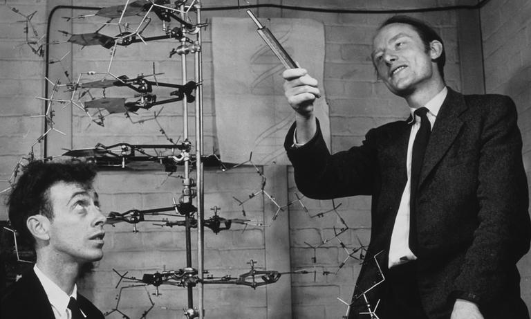 The discoverers of the structure of DNA. James Watson, at left, and Francis Crick, with their model of part of a DNA molecule in 1953.