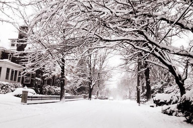 Snow falls on Back Bay in Boston. (Alex Kingsbury/WBUR)