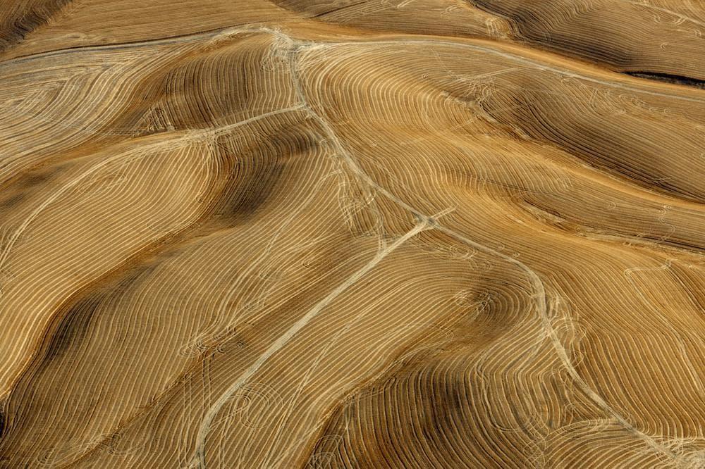 "Neal Rantoul's 2010 photo ""Wheat."" (Courtesy of Rantoul)"