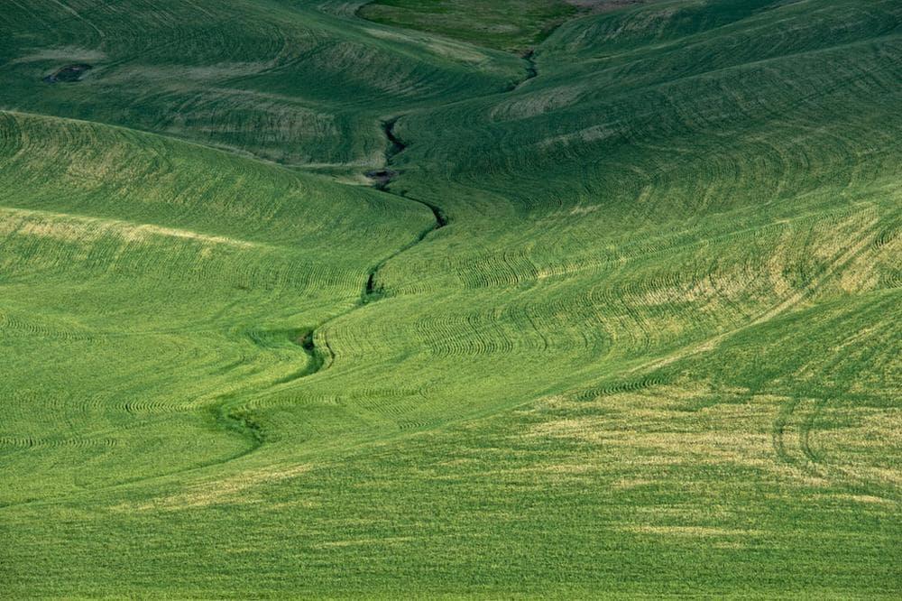 "Neal Rantoul's 2012 photo ""Wheat."" (Courtesy of Rantoul)"