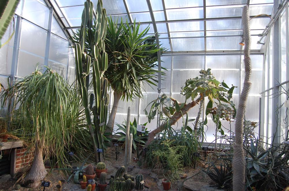 The desert is the first climate featured in the greenhouses at Wellesley College's Botanic Gardens. (Greg Cook)