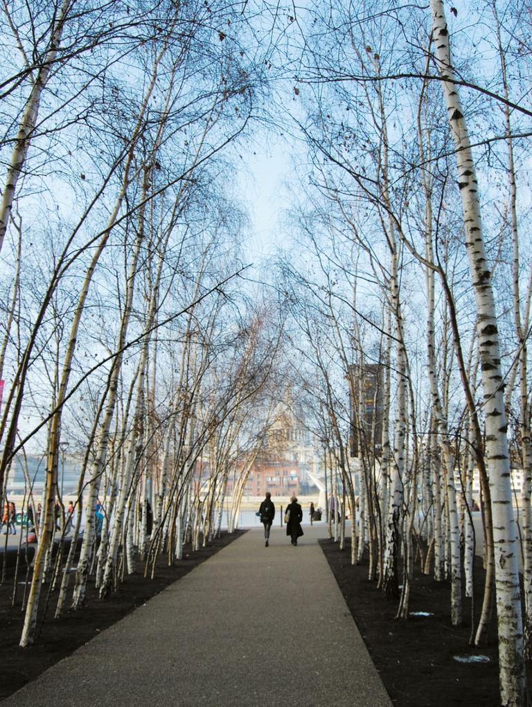 Birch thickets leading to the Thames River at London's Tate Modern museum. (Vogt Landscape Architects/Courtesy Princeton Architectural Press)