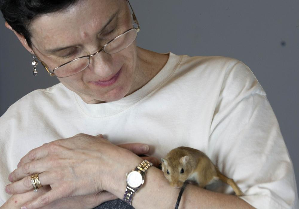 Libby Hanna holds a gerbil prior to the New England Gerbil Show. (Rodrique Ngowi/AP)