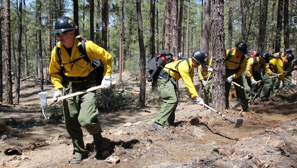 In this 2012 photo provided by the Cronkite News, the Granite Mountain Hotshot crew clears a fire line through the forest. On Sunday, June 30, 2013. (Connor Radnovich/Cronkite News via AP)