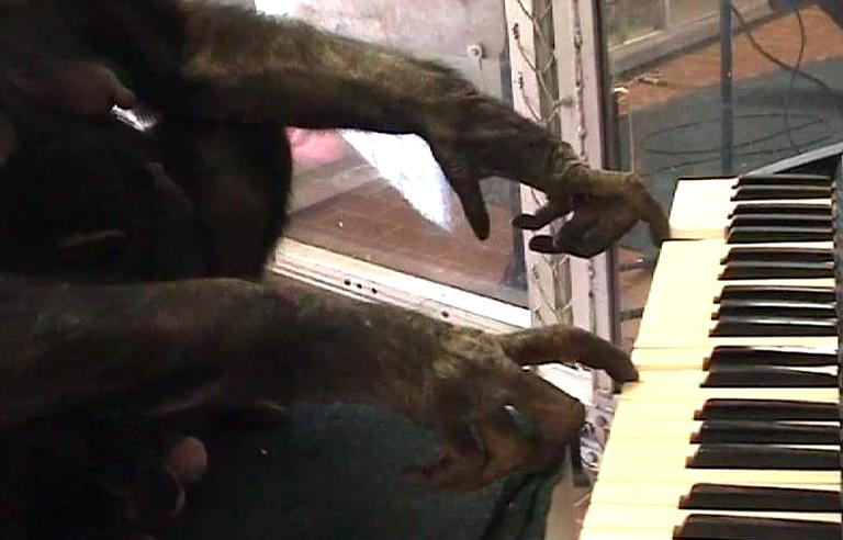 Panbanisha, a female bonobo, plays a computerized keyboard in a duet with musician Peter Gabriel. (Screenshot from video)