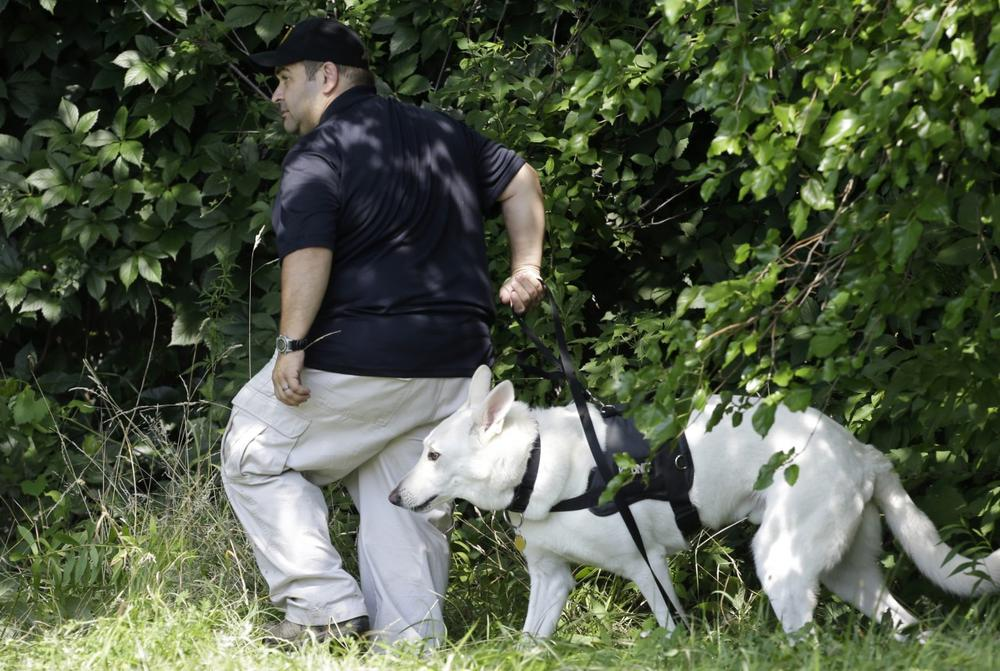 An investigator and his dog search a wooded area Sunday, July 21, 2013 near where three bodies were recently found in East Cleveland, Ohio. (Tony Dejak/AP)