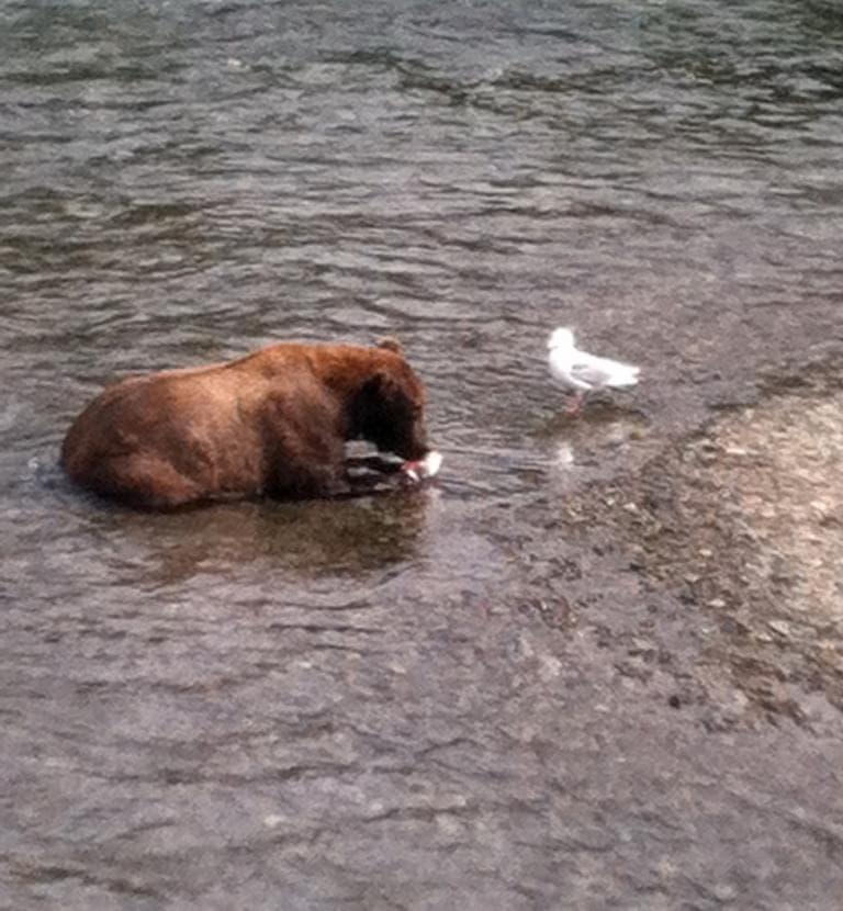 Everyone eats salmon in Alaska. (Kathy Gunst/Here & Now)