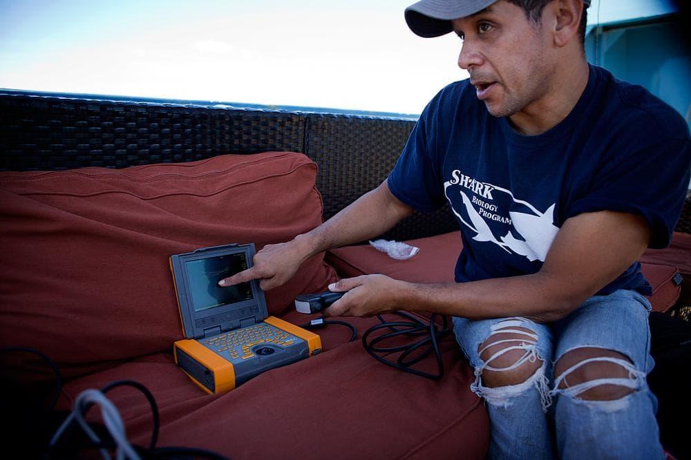 Jim Gelsleichter, assistant professor of biology at University of North Florida, demonstrates the ultrasound machine he uses on the sharks. (Jesse Costa/WBUR)