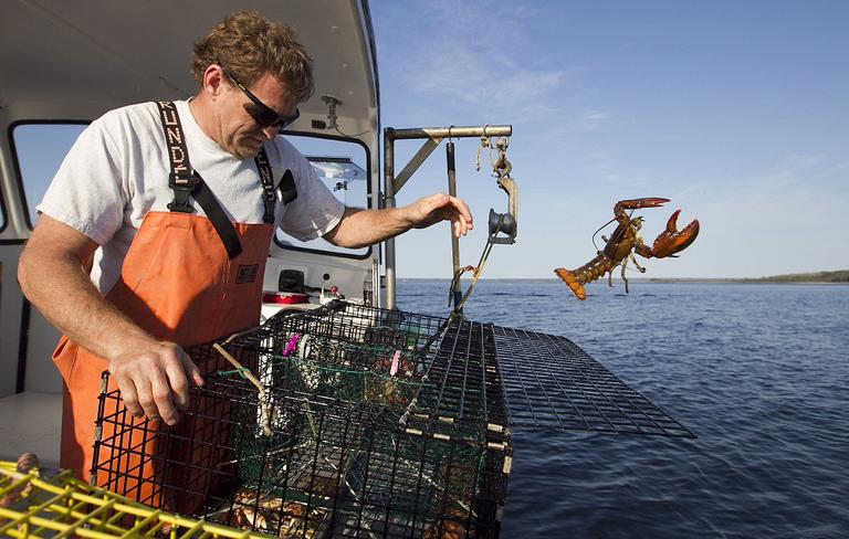 Scott Beede returns an undersized lobster while checking traps in Mount Desert, Maine, May 21, 2012. (Robert F. Bukaty/AP)