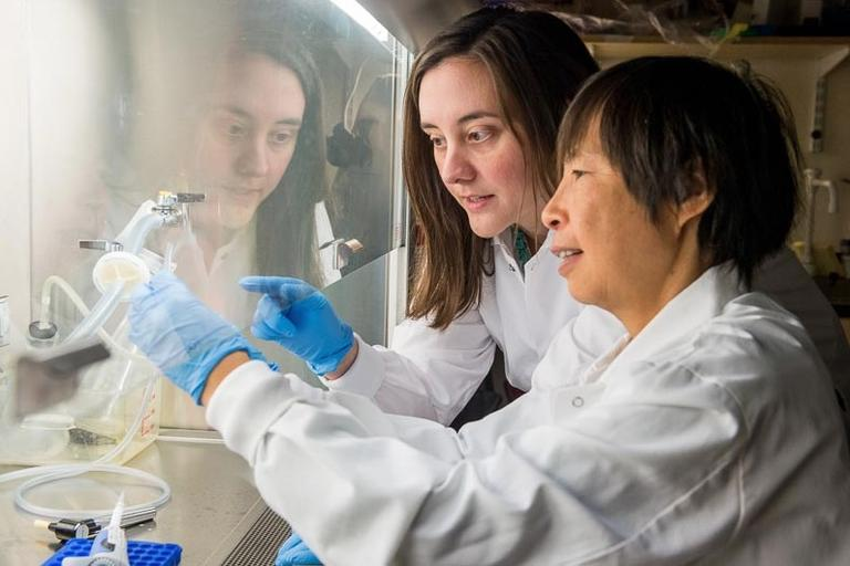 Dr. Ki Goosens and Technical Associate Junmei Yao examine a piece of human brain at the McGovern Institute for Brain Research. They are looking for stress-sensitive genes that are abnormally activated in the amygdala — a brain region that regulates emotion — in people who committed suicide. (Courtesy Justin Knight Photography and McGovern Institute)