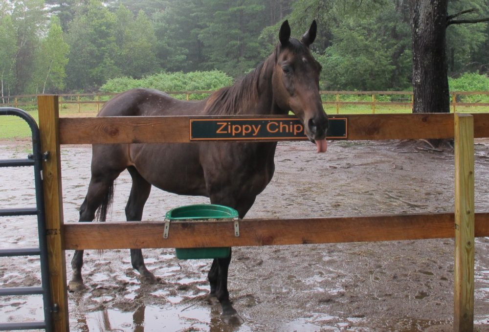 Zippy Chippy wishes you a happy New Year. (Bill Littlefield/Only A Game)