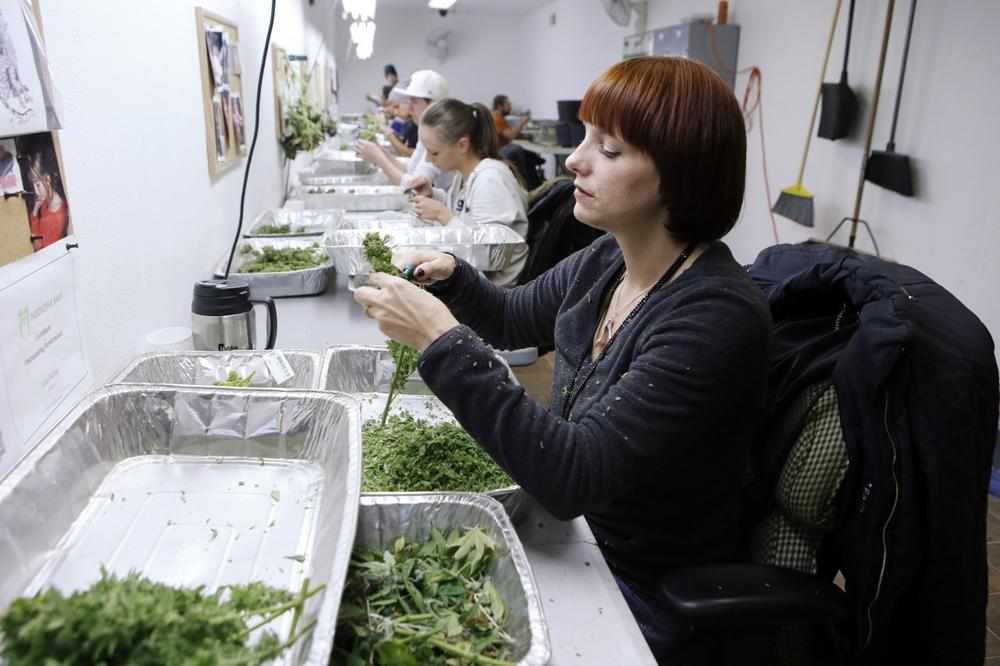 In this Dec. 5, 2013 photo, workers process marijuana in the trimming room at the Medicine Man dispensary and grow operation in northeast Denver. Colorado prepares to be the first in the nation to allow recreational pot sales, opening Jan. 1. (Ed Andrieski/AP)
