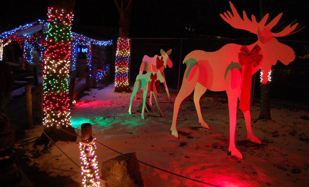 """Moose at the Stone Zoo's """"ZooLights."""" (Greg Cook)"""