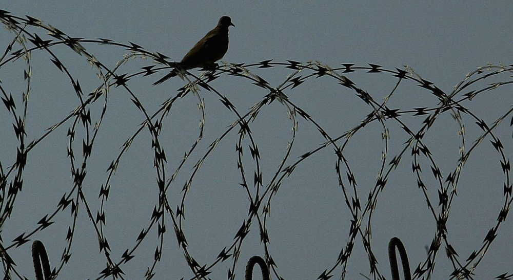 A bird sits on the razorwire fence of the prison, as Iraqi prisoners wait to be released at Abu Ghraib prison west of Baghdad in Iraq on Friday, June 23, 2006.  (Wathiq Khuzaie/AP)