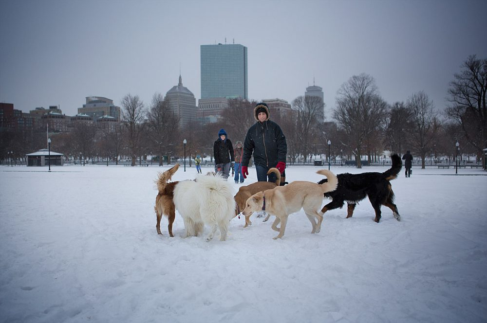 Owners play with their dogs in the snow on Boston Common. The city cancelled school Wednesday. (Jesse Costa/WBUR)