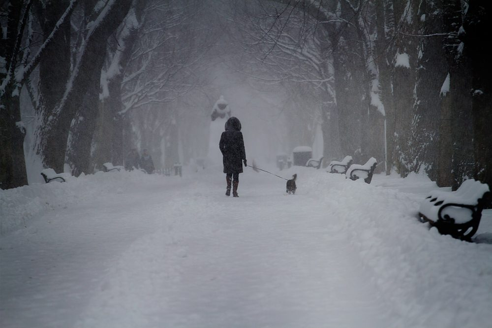 A woman walks her dog through the Commonwealth Mall. (Jesse Costa/WBUR)