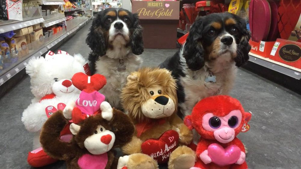 Jason Bellini is among the Americans who will be buying Valetine's day gifts for their pets. (Jason Bellini)