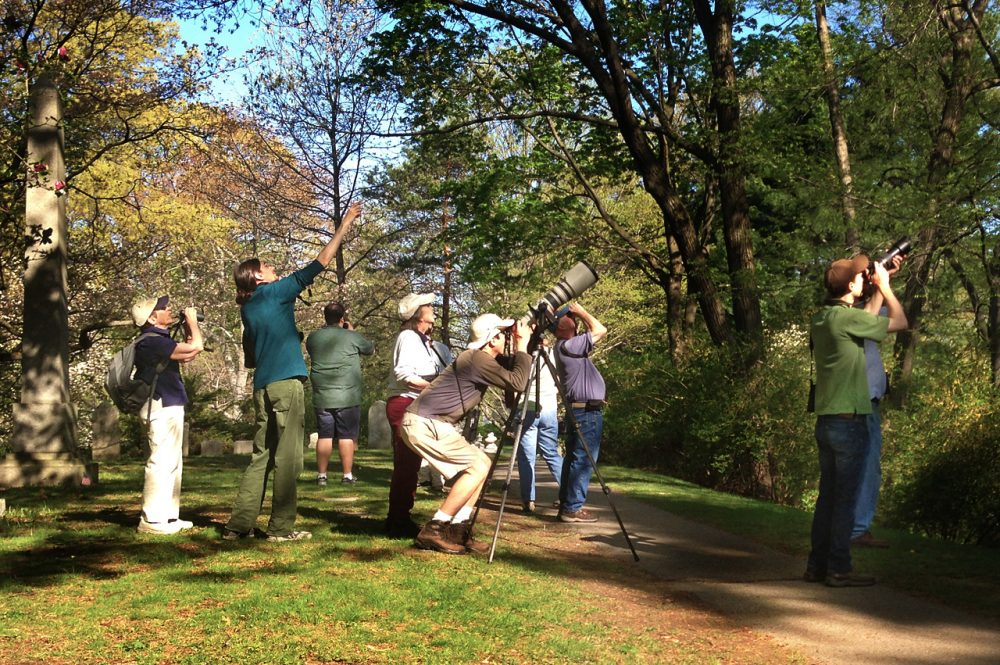 Bird watchers gather at Mount Auburn Cemetery. (Bruce Gellerman/WBUR)