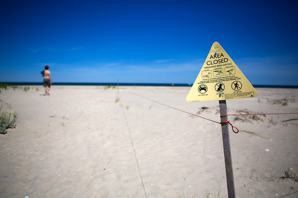 The federal agency that oversees the Monomoy National Wildlife Refuge says kiteboarding and piping plovers are a bad mix, so it's proposed a ban on the sport there. And that's caused howls of protest from kiteboarders who believe they can enjoy their sport without posing any threat to birds. (Jesse Costa/WBUR)