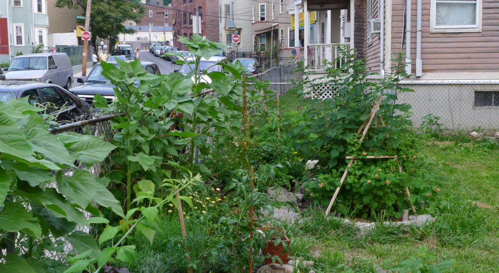 """Mark Dwortzan: """"[Transition Towns] empower residents to produce and consume more of life's essentials where they live, all while minimizing their reliance on fossil fuels."""" Pictured: The Egleston Community Orchard in Jamaica Plain, Mass., was once a vacant lot. (chipmunk_1/Flickr)"""