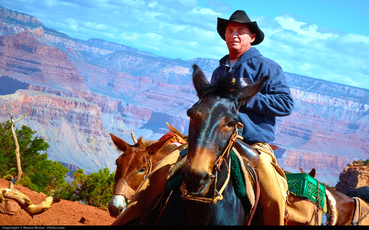 """""""Cowboy"""" doctors deviate from professional guidelines and often provide more aggressive care than is recommended. (Moyan Brenn/Flickr)"""