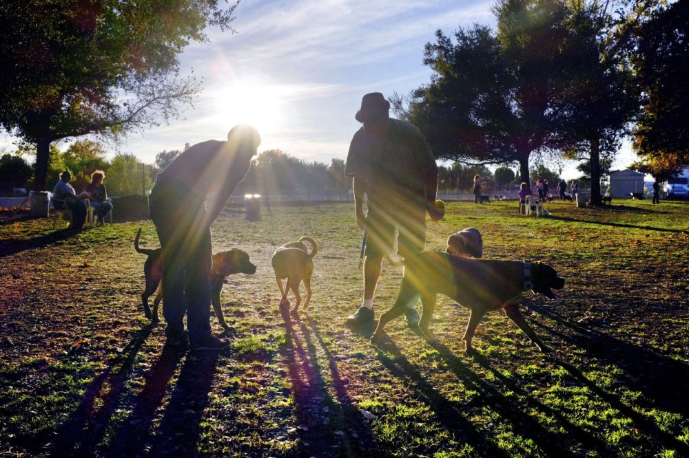 Visitors and their dogs enjoy a sunny afternoon at the Sepulveda Basin Dog Park in the Encino section of Los Angeles. (Richard Vogel/AP)